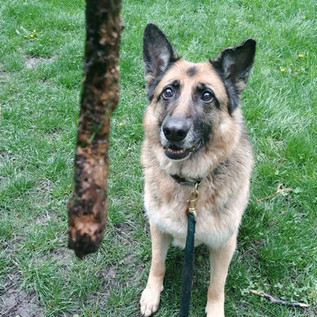 """""""The absolute best dog walking service in Seattle! I have two little dogs that take awhile to build trust with people, and the dog walkers with Trails & Tails were fantastic with them.""""  - Kiara, dog mom of 7 years"""
