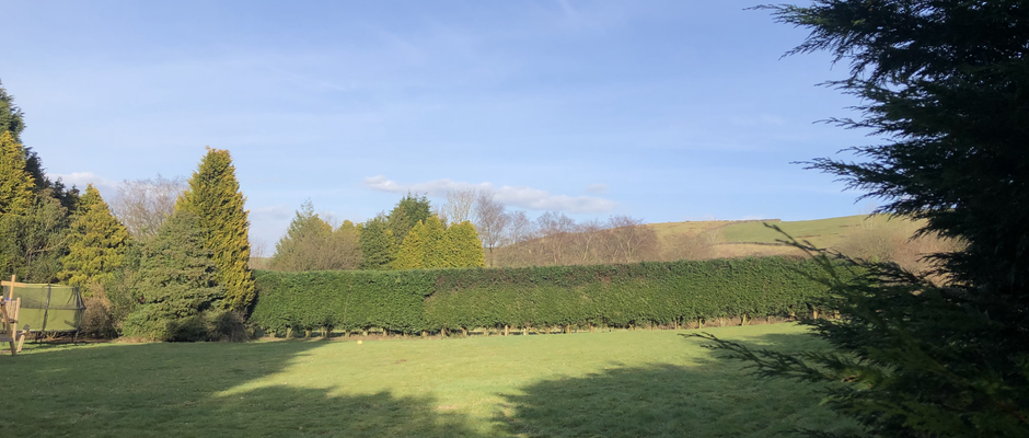Hedge Reduction
