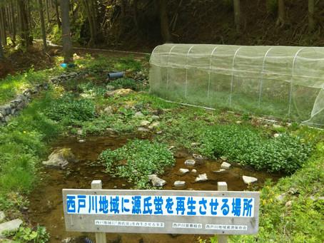 ホタル再生プロジェクト カワニナ採取
