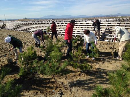 荒浜海岸 復興植樹会報告
