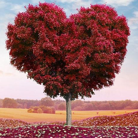 heart%20tree%20(red)_edited.jpg