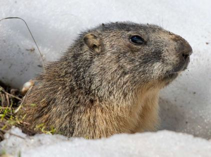 Is Your Fitness Routine Reliving Ground Hog Day?- Fit Training Blog for Women 40, 50 and Beyond