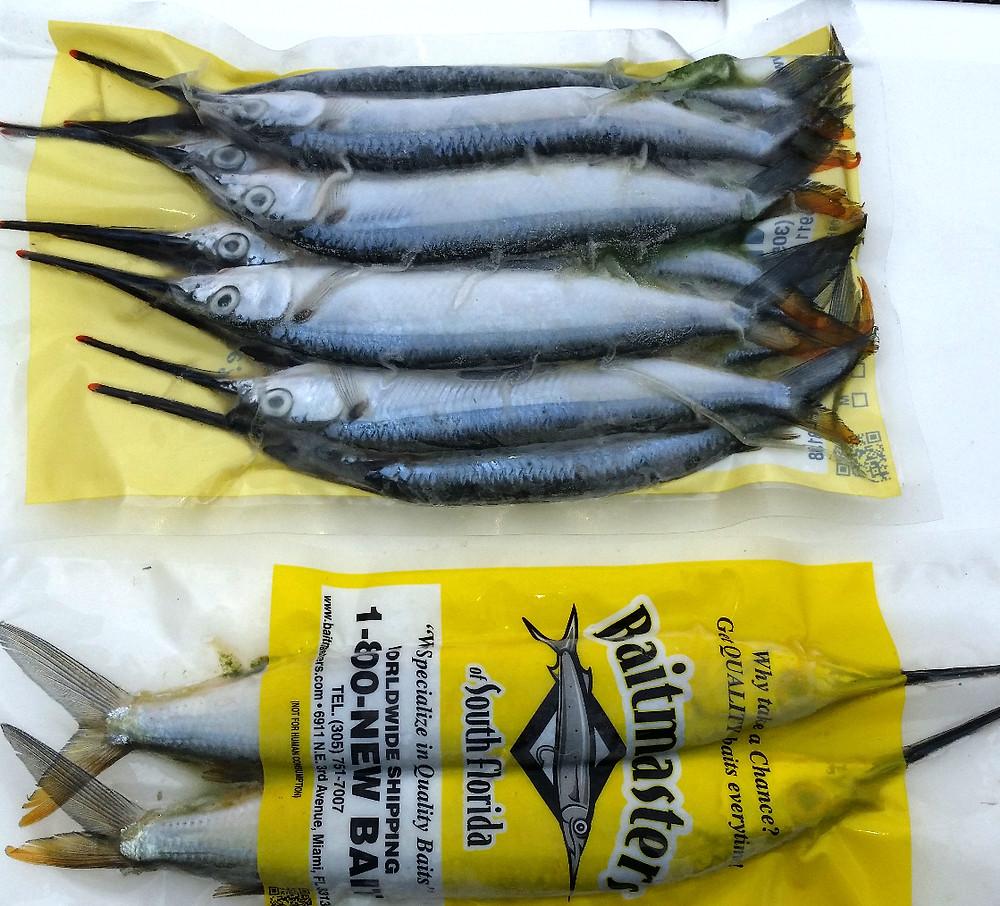 best offshore bait supply ballyhoo sardines squid in Port O'connor Texas
