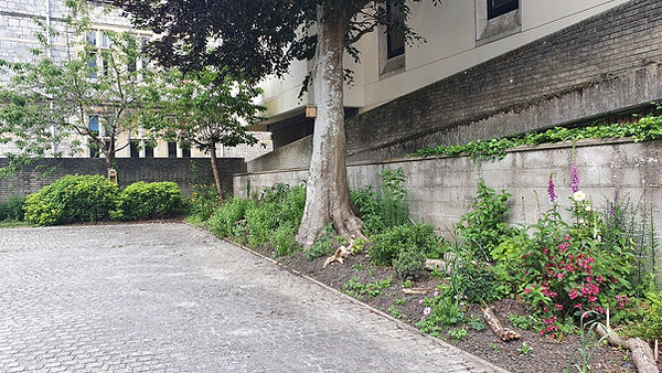 16P wild garden.jpg
