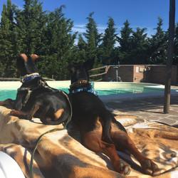 Cani&Piscina