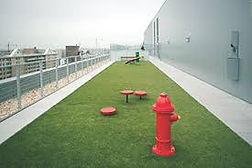 urban dog park.jpg