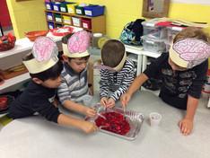 Examining Brains