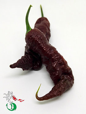 JOY'S GHOST CAYENNE CHOCOLATE DD F2 - O.P.