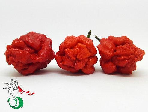 BHUTLAHDRAX CROWN RED - O.P