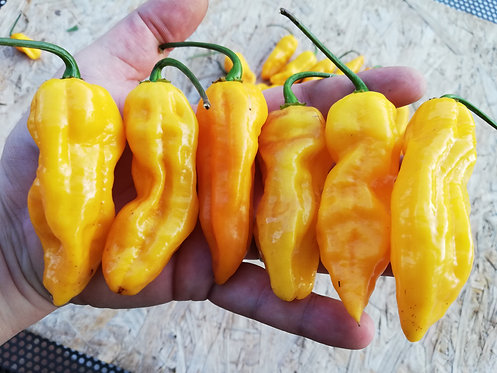 BHUT JOLOKIA SURPRISE YELLOW DD F4 - O.P