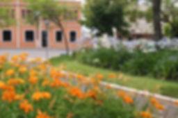 Flores em Santiago