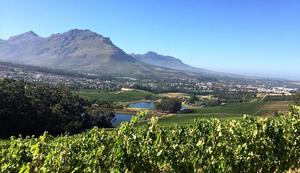 Glenelley wine estate