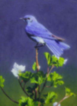 Bluebird on Oil & Canvas