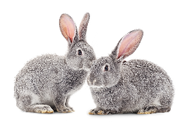 Rabbits_edited.png