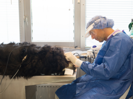 The Importance of Pet Dental Cleaning