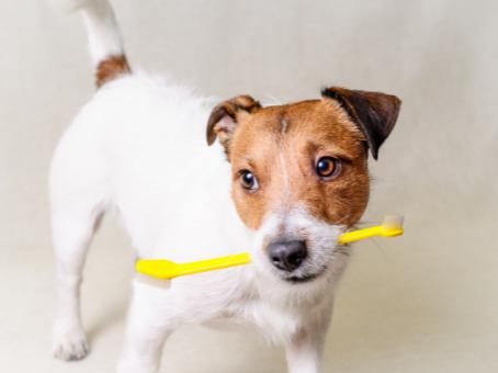 Five Powerful Dog Teeth Cleaning Hacks