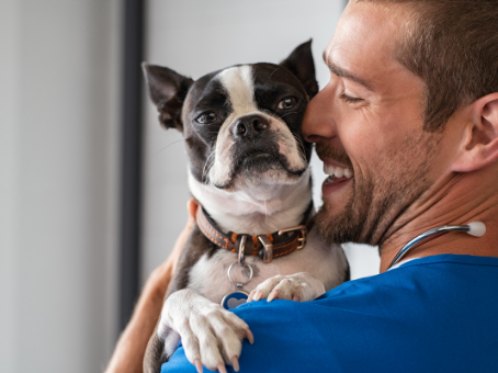 Emergency Vet Edmonton - Things to Consider When Deciding Which Vet is Best For Your Pet
