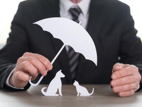 Top 5 Local Pet Insurance Providers Alberta