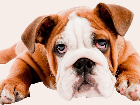 Dog Dental Cleaning Cost in Edmonton