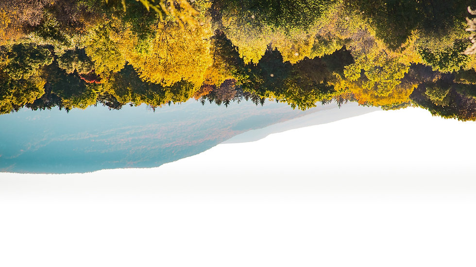 Gunsel-Website_Tree_Backdrop.jpg