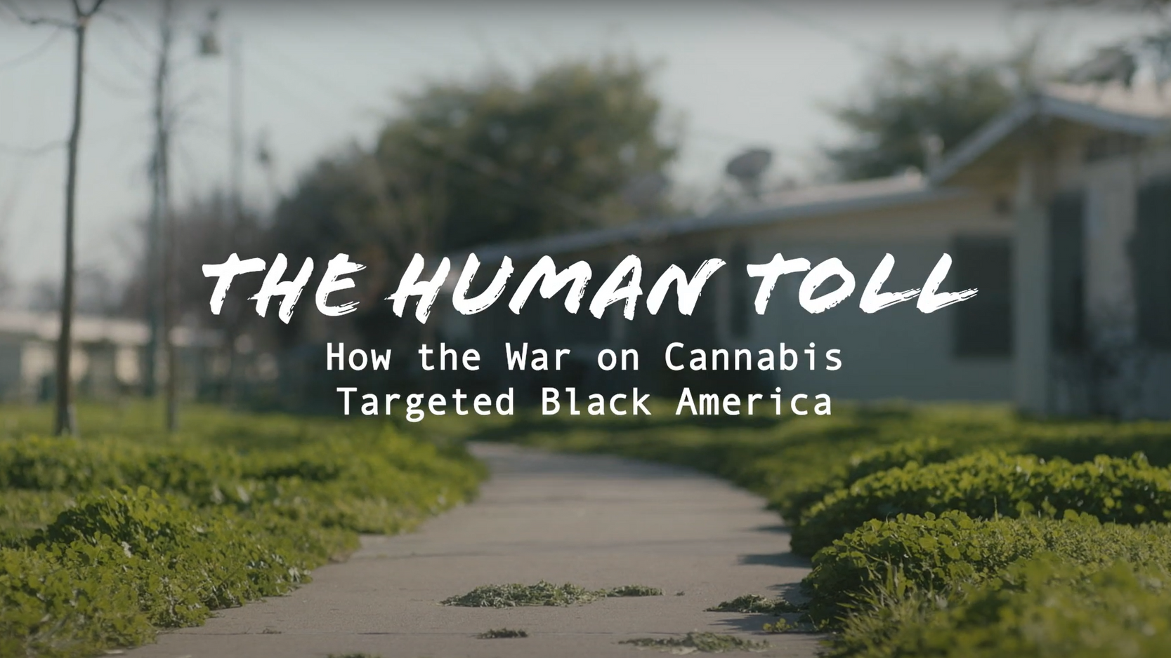 The Human Toll