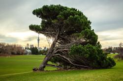 Domain, Auckland