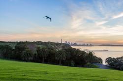 MJ Auckland