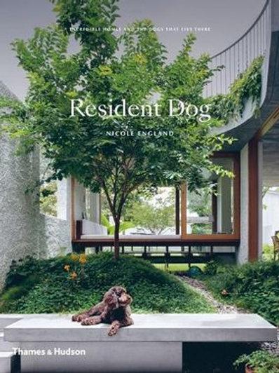 Resident Dog - Nicole England