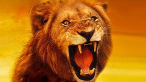 O Rugido do Leão (Meditações sobre COVID-19)