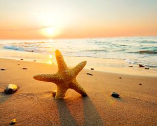 Estrela do Mar, praia, natureza