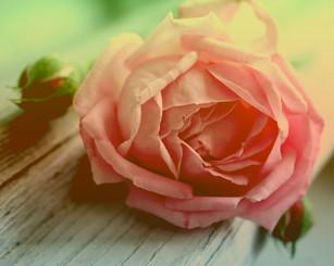 flor-sem-vida.jpg