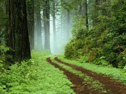 moody misty forest track