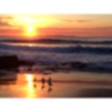 sunrise across the sea from the beach and birds on the sand