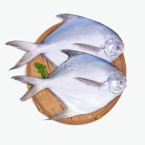 Pomfret Fish-Fresh - 1 Kg (7-8 piece per Kg) (Net)