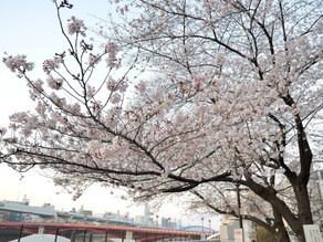 パンデミックの春
