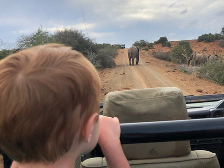 How to safari with (young) children?