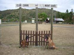 Club canin du Mont-Dore 007.jpg