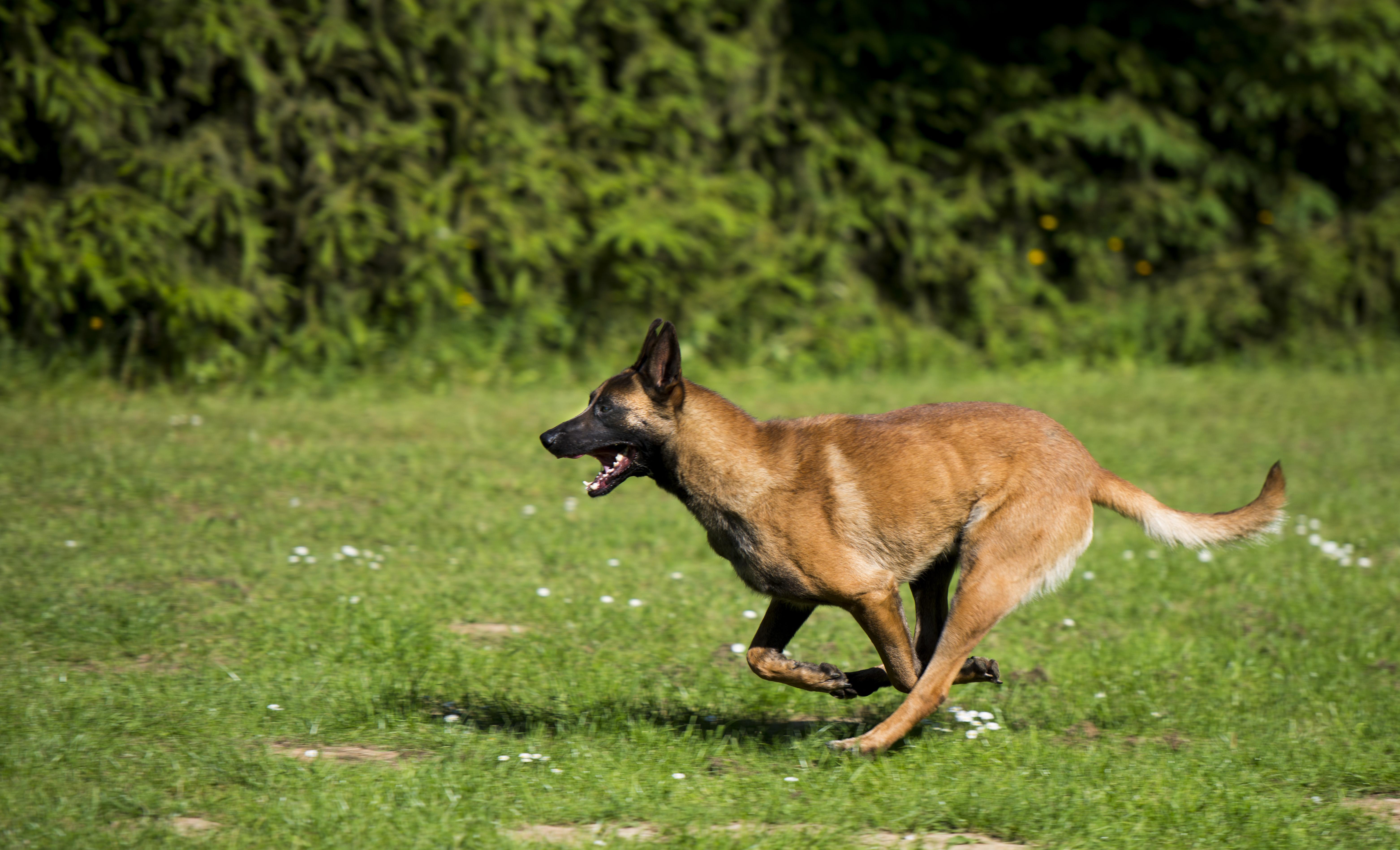 Dogsland_432.JPG