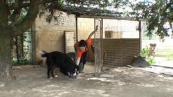 Dogsland-rushes-3.jpg