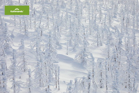 Mount Zao snow trees.jpg