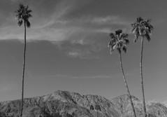 La Quinta resort Coachella