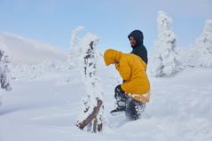 Snow monsters Mount Zao.jpg