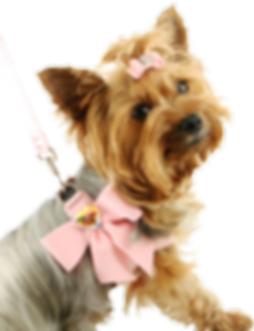 dog_PNG2448.png