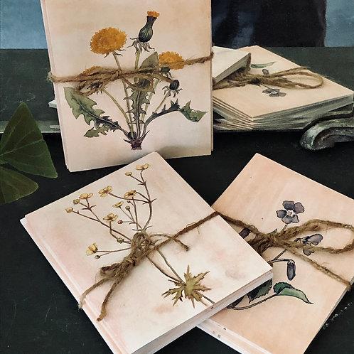 Wildflower notecards