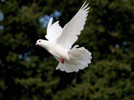O Espírito Santo: história, atuação e propósito
