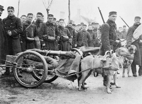 Dog-pulled Belgian machine gun battery