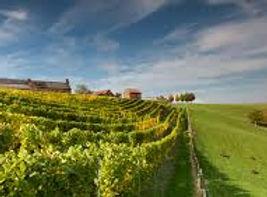 wijngaardsberg.jpeg