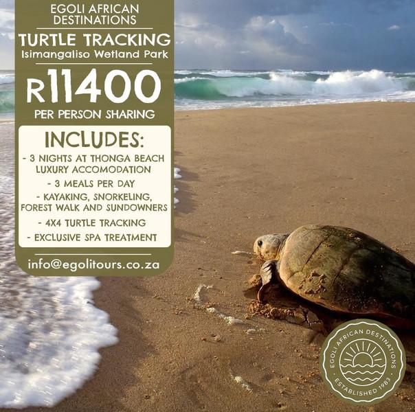 Turtle Tracking - Thonga Beach Lodge