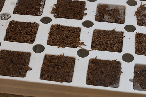 HYDROPEAT Grow Plug Tray