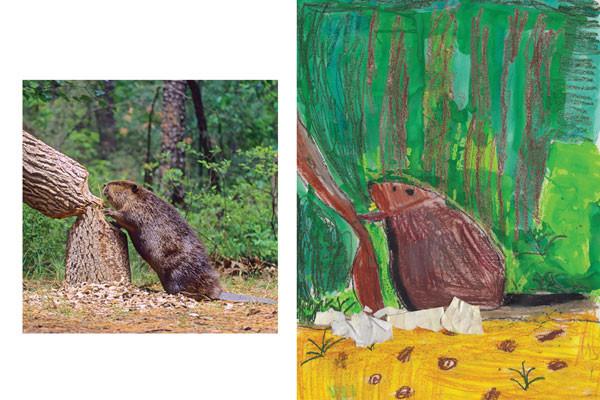 Beaver comparison.jpg